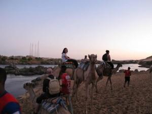 Camel convoy ready to go